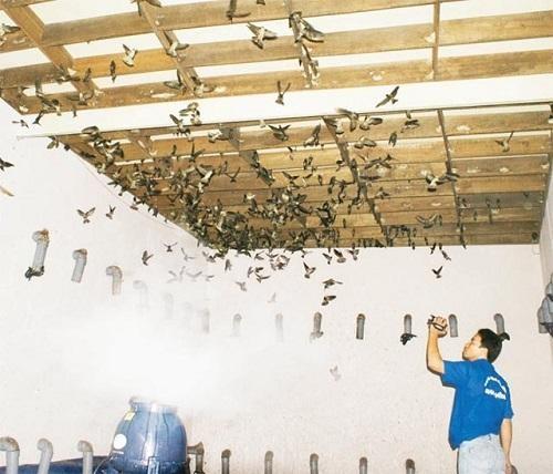 Vũ Xuân - Địa chỉ cung cấp giá sỉ thiết bị nhà yến tại TPHCM